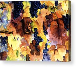 Vineyard In Napa Paintings Acrylic Prints