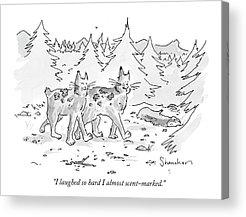 Bobcats Drawings Acrylic Prints