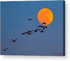 Migration Path Of Sandhill Cranes Photographs Acrylic Prints