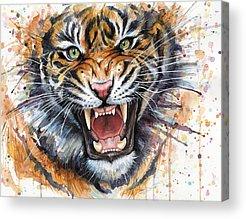 Zoo Animal Acrylic Prints