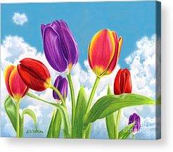 Pinks And Purple Petals Acrylic Prints