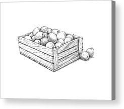 Apple Crates Drawings Acrylic Prints