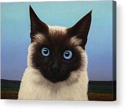 Blue Eyes Acrylic Prints