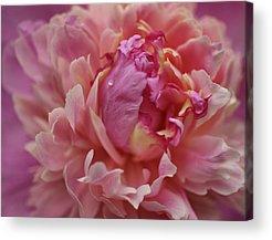 Indiana Flowers Acrylic Prints