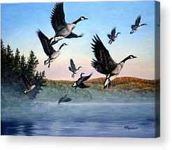 Goose Acrylic Prints