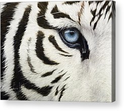Close Up Acrylic Prints