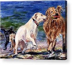 Dogs On Beach Acrylic Prints