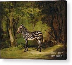 Forest Animal Acrylic Prints