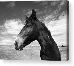 Wild Horse Acrylic Prints