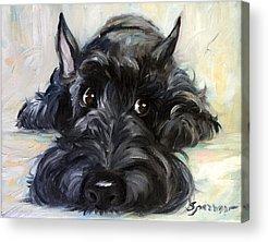 Scottish Terrier Acrylic Prints