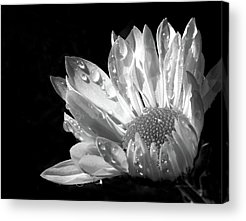 Flowers And Water Drops Acrylic Prints
