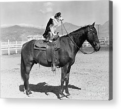 Saddle Acrylic Prints