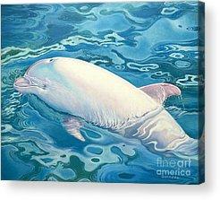 Dolphin Acrylic Prints