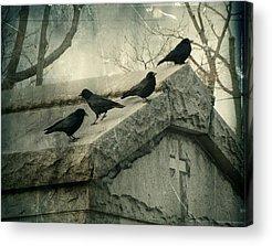 Crows Mingling Photographs Acrylic Prints