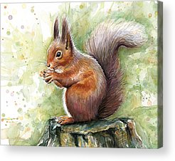 Squirrel Acrylic Prints