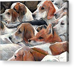 Beagle Acrylic Prints