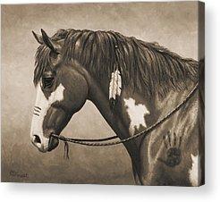 Chestnut Paint Horse Acrylic Prints