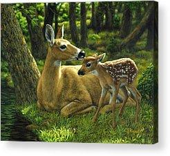 White Tail Deer Acrylic Prints
