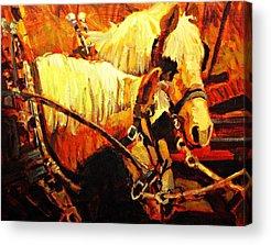 Farm Horse Acrylic Prints