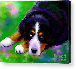 Bernese Mountain Dog Acrylic Prints
