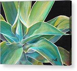 Aloe Vera Acrylic Prints