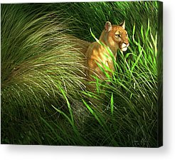Everglades Acrylic Prints