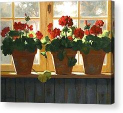 Red Geraniums Paintings Acrylic Prints