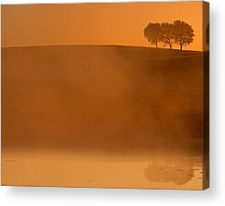 Tree In Golden Light Acrylic Prints