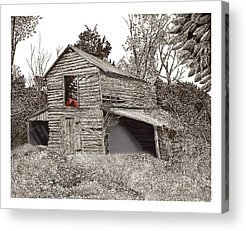 Pen And Ink Of Barn Drawings Acrylic Prints