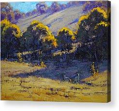 Kangaroo Acrylic Prints