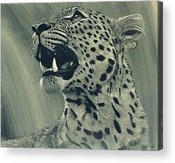 Leopard Acrylic Prints