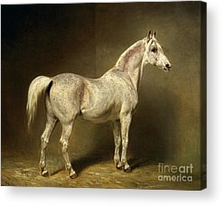 Horse Stable Acrylic Prints