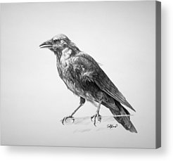 Birds Drawings Acrylic Prints