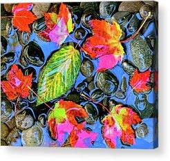 Fallen Leaf On Water Photographs Acrylic Prints