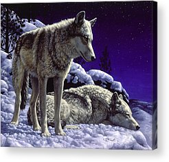 Dog In Snow Paintings Acrylic Prints