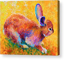 Hare Acrylic Prints
