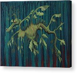 Leafy Sea Dragon Acrylic Prints