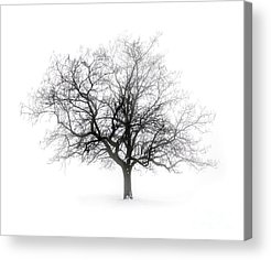 Gray Acrylic Prints