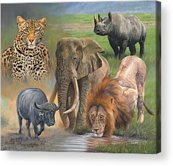 Rhinocerus Acrylic Prints