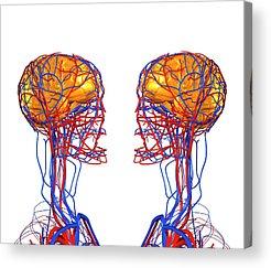 Neurobiology Acrylic Prints