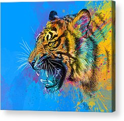 Animal Acrylic Prints