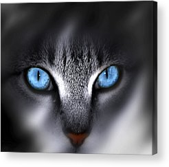 Blue Eyes Acrylic Prints