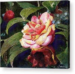 Camellias Acrylic Prints