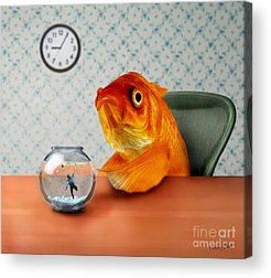 Goldfish Acrylic Prints