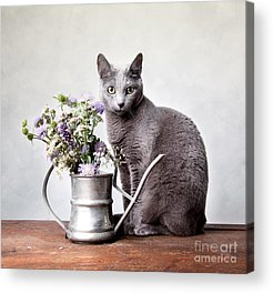 Domestic Cat Acrylic Prints