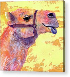 Camel Acrylic Prints