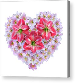 Fairy Hearts Pink Flower Acrylic Prints