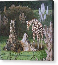 Termites Paintings Acrylic Prints