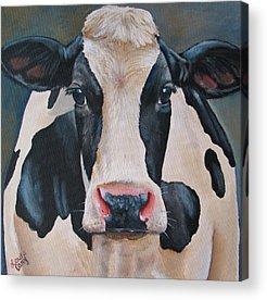 Holstein Acrylic Prints