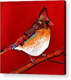 Red Tail Hawk Acrylic Prints